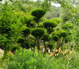 Buckhof Garten