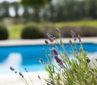 Naturpool mit Lavendel